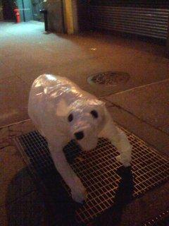 Street bag dog: up